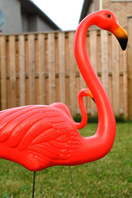 Lawn Candy - Flamingos Flock the Yard